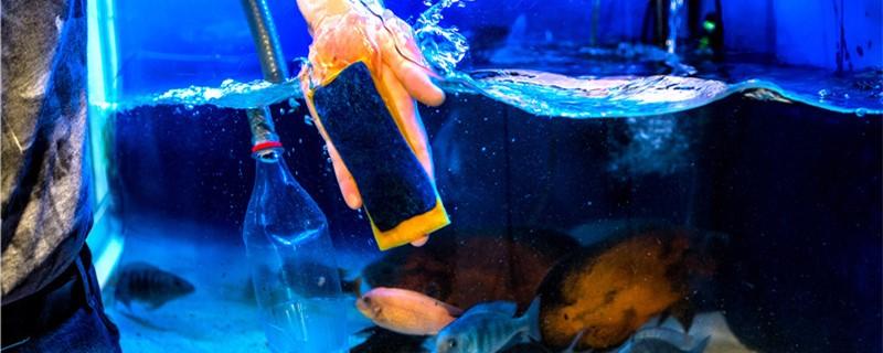什么是养水,鱼缸养水的正确方法-轻博客
