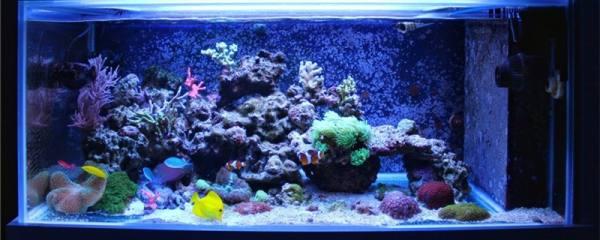 鱼缸怎么养水,怎么调节水的酸碱度