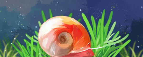 苹果螺吃水草吗,能养在草缸里吗