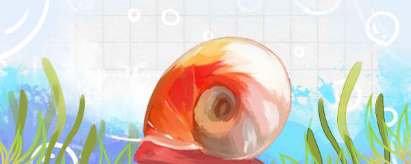 苹果螺什么时候产卵,卵多久孵化
