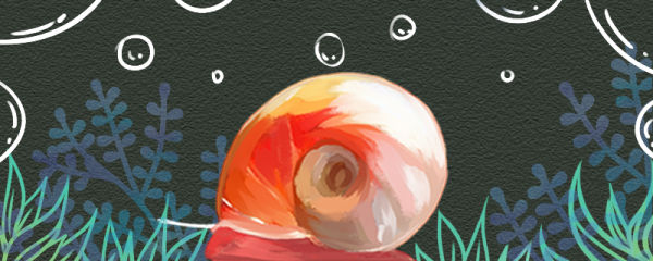 苹果螺需要打氧吗,需要过滤器吗