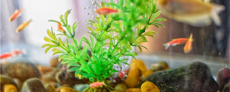 鱼缸里有大量微小气泡是什么原因,怎么解决-轻博客