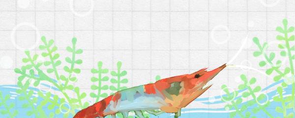琉璃虾好养吗,怎么养