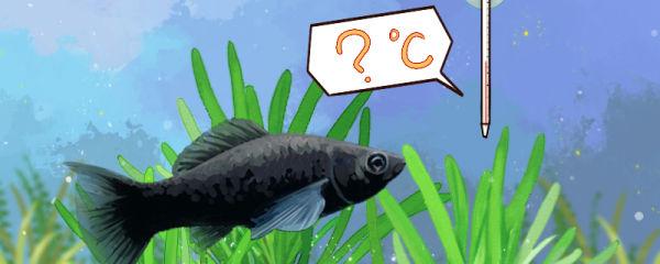 黑玛丽鱼水温多少度合适,最低水温是多少
