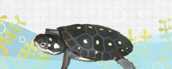星点水龟好养吗,怎么养
