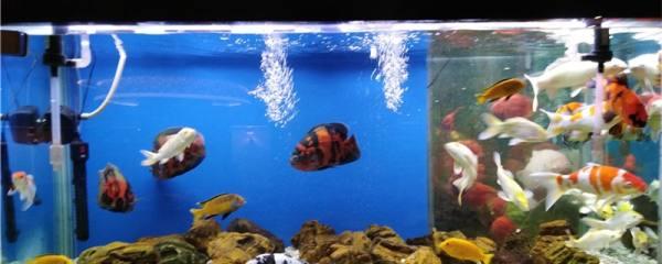 鱼缸需要换水吗,为什么要换水