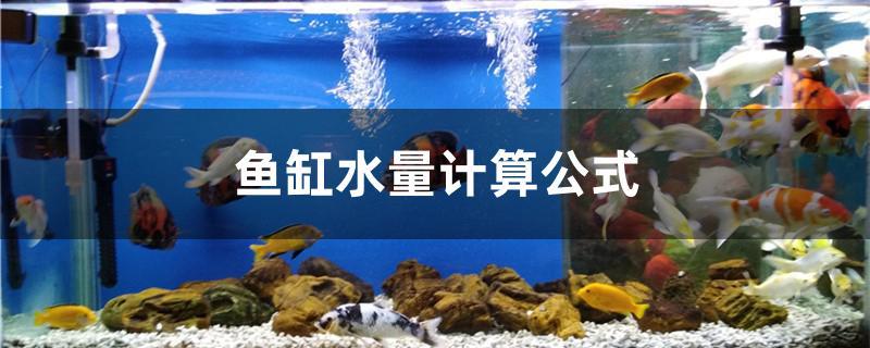 鱼缸水量计算公式是什么-轻博客