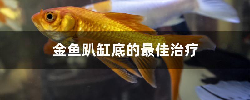 金鱼趴缸底的最佳治疗方法是什么-轻博客