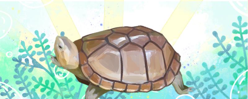 蝎泽蛋龟和红面蛋龟的区别是什么,能一起养吗