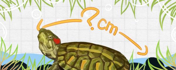格兰德彩龟能长多大,能活多久