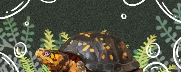 箱龟好养吗,怎么养