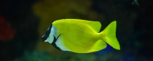 养着鱼的鱼塘怎么消毒,还有什么其它的消毒方法