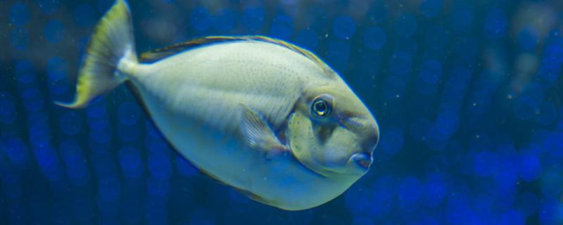 母鱼难产的症状是什么,母鱼为什么会难产