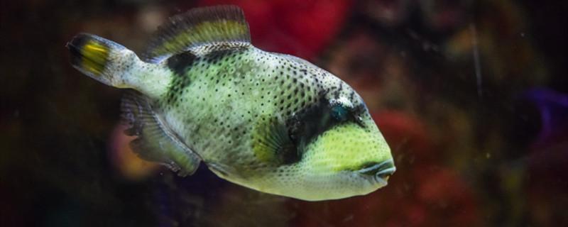 鱼缸里就一条鱼会产卵吗,怎么用鱼缸进行繁殖