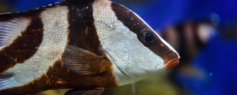 公鱼和母鱼的区别有哪些,公鱼和母鱼怎么繁殖