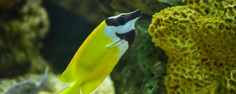 鱼会得抑郁症吗,一条鱼怎么养
