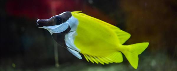 鱼在鱼缸里会无聊吗,鱼儿孤单怎么办