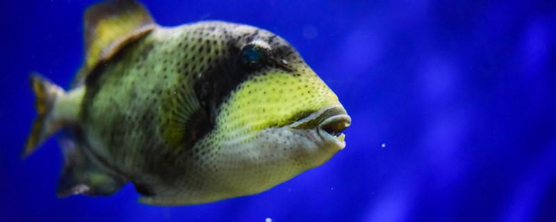 鱼缸里的鱼饿了有什么表现,如何给鱼喂食