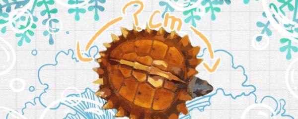 刺山龟能长多大,能活多久