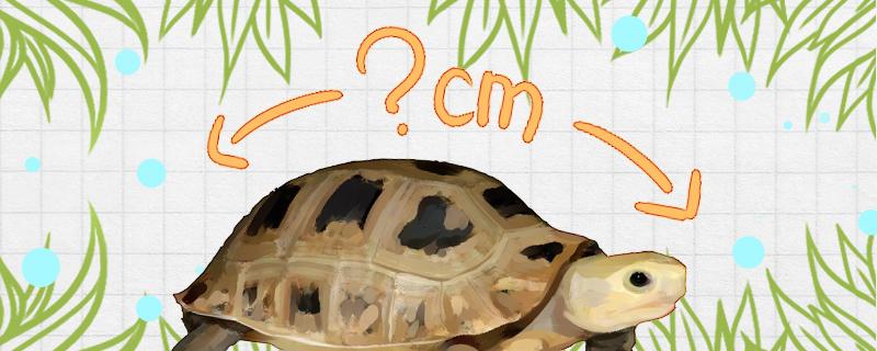 缅甸陆龟寿命多长,能长多大