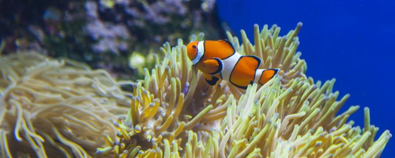 鱼死了沉底是什么原因,鱼死亡的原因有哪些