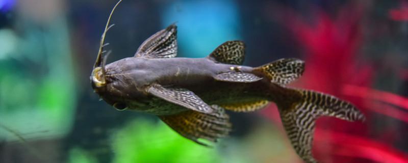 鱼得了白点放盐管用嘛,如何治愈白点病