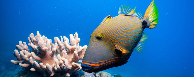 水霉病会传染其他鱼吗,治疗水霉病有哪些药物