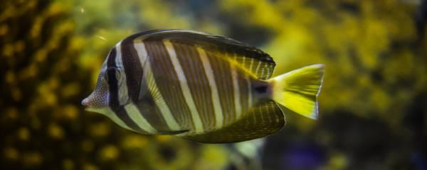 新鱼塘放鱼苗为什么会死,鱼塘鱼苗死因有哪些