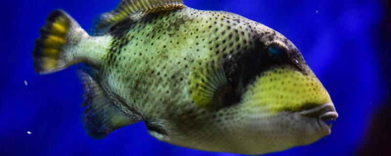 小鱼怎么养不会死,如何饲养小鱼