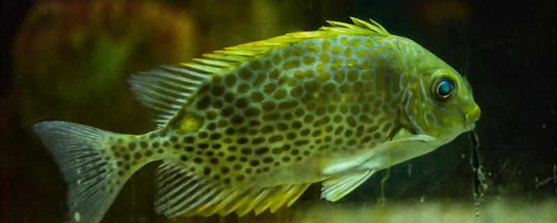 河里的鱼抓回家该怎么养,抓的鱼能养活吗