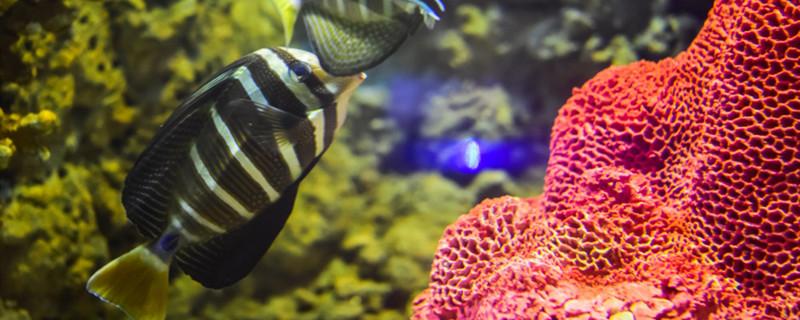 鱼在盆里怎么才不会死,如何用脸盆养鱼