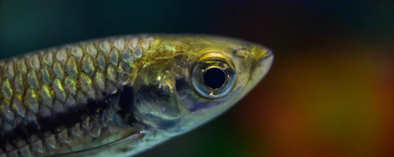 鱼缸换水怎样让水温一致,怎么给鱼缸换水