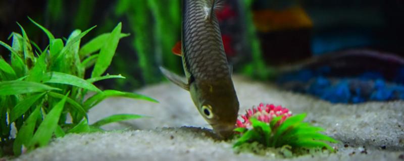 鱼缸水怎么样才能清澈,改善水质有哪些方法