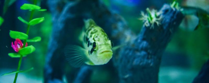 养鱼池水浑浊怎么处理,养鱼池怎么消毒杀菌