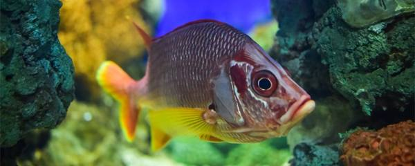1米5鱼缸用多少w的水泵,鱼缸缺氧怎么办