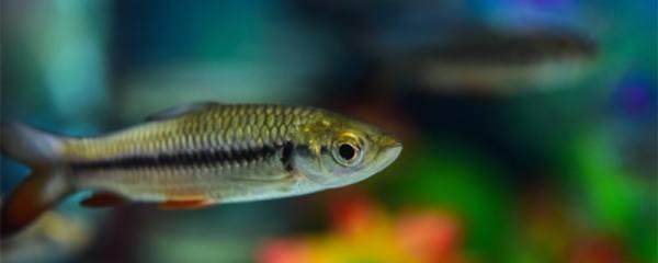 养鱼一般养几条最好,混养有哪些注意事项