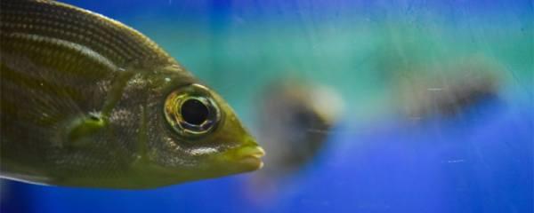 如何快速清洗鱼缸,鱼缸爆藻怎么清理
