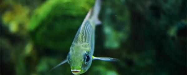 鱼缸玻璃一层白色污垢,为什么鱼缸上有白色污垢