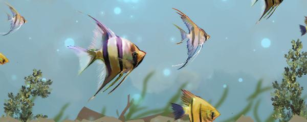 神仙鱼能长多大,用多大的鱼缸好