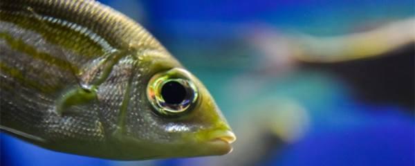 鱼缸养什么鱼最好,常见的观赏鱼有哪些