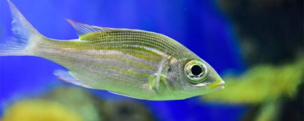 1米5鱼缸养什么鱼最好,适合养哪种鱼