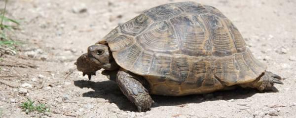 养龟用什么容器比较好,如何饲养乌龟