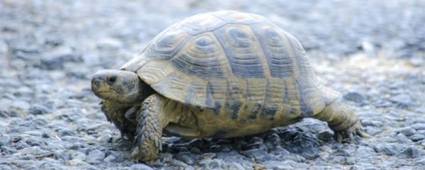 养龟自来水怎么除氯,除氯方法有几种