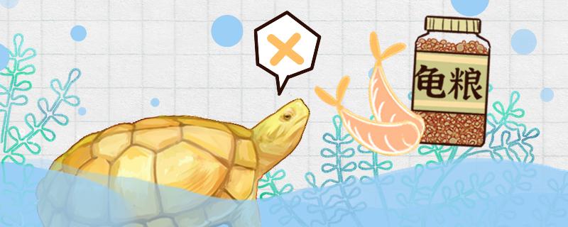 石金钱龟不吃东西是什么原因,怎么治疗