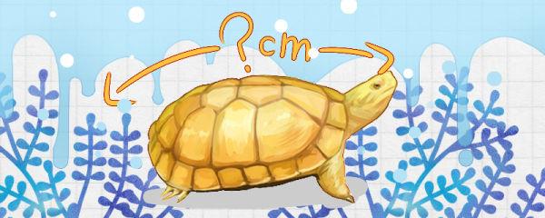 石金钱龟能活多少年,最大能长多大