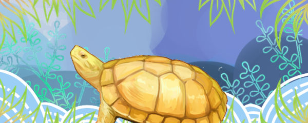 石金钱龟能长多大,能和其它龟混养吗