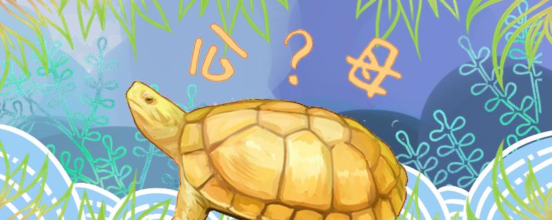 石金钱龟怎么分辨公母,公母能一起养吗