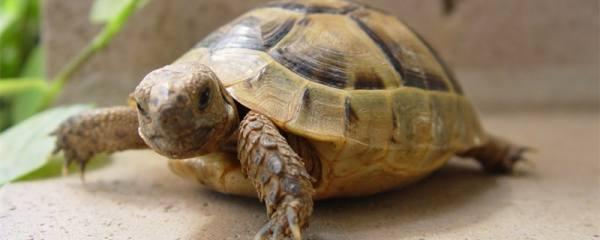 小乌龟吃米饭吗,小乌龟吃什么食物