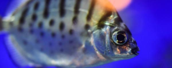 鱼为什么会咬别的鱼鳞,鱼被咬掉鱼鳞怎么办