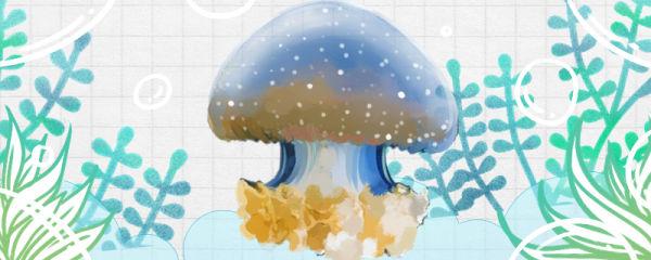 海蜇是动物还是植物,是什么动物